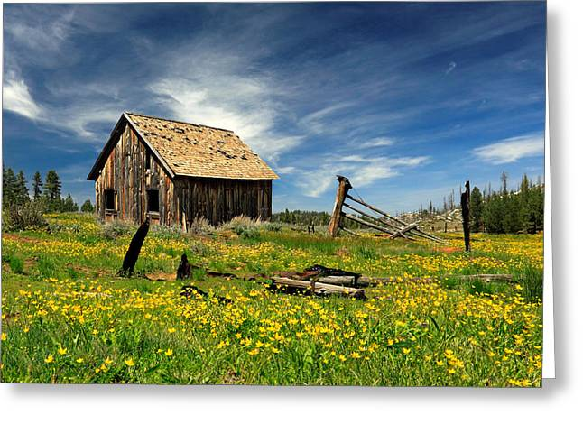 Rustic Cabin Greeting Cards - Cabin In A Field Of Flowers Greeting Card by James Eddy