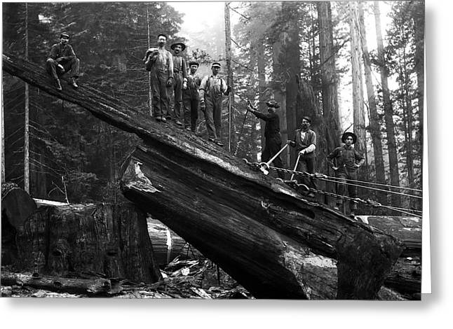 Clear Cut Greeting Cards - CABLING a REDWOOD LOG c. 1890 Greeting Card by Daniel Hagerman