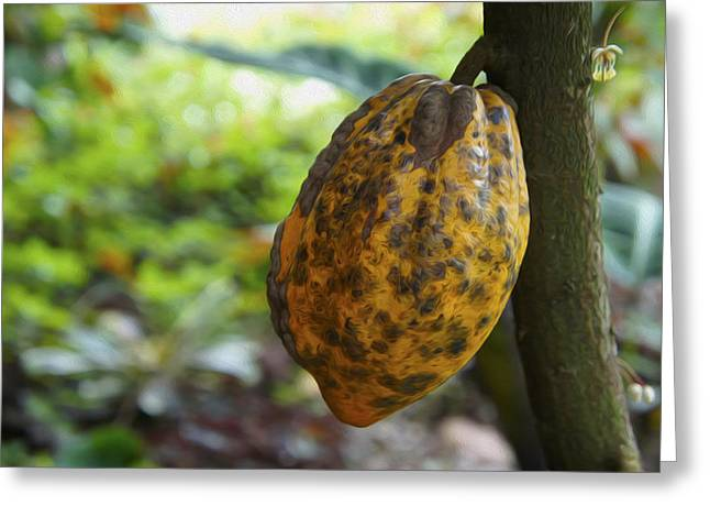 Food Digital Art Greeting Cards - Cacao Plant Greeting Card by Aged Pixel