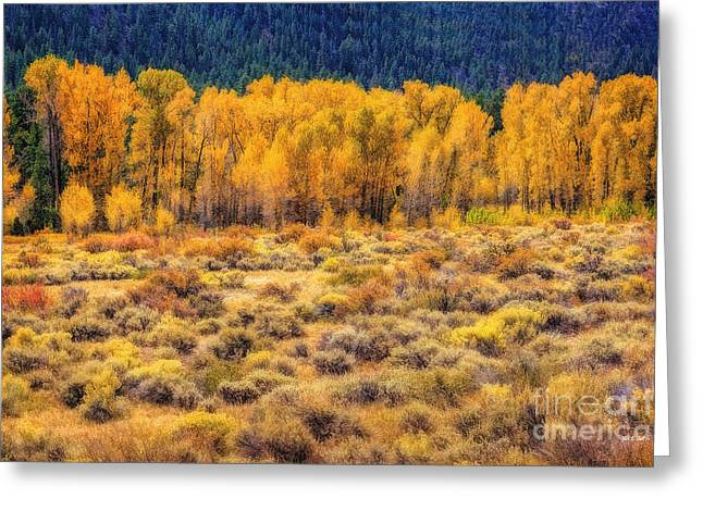 Cache La Poudre River Colors Greeting Card by Jon Burch Photography