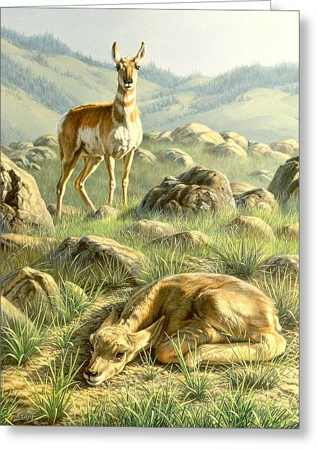 Fawn Greeting Cards - Cached Treasure - Pronghorn Greeting Card by Paul Krapf