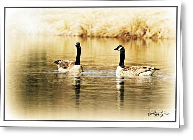Cackle Greeting Cards - Cackling Geese Greeting Card by Lila Fisher-Wenzel