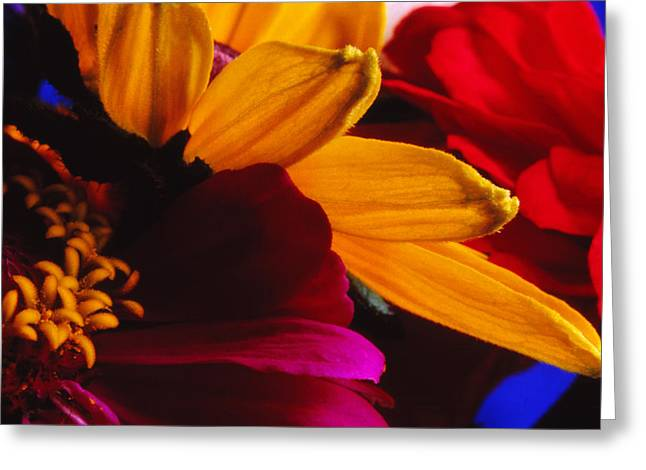Pinks And Purple Petals Greeting Cards - Cacophony Greeting Card by Thomas Shanahan