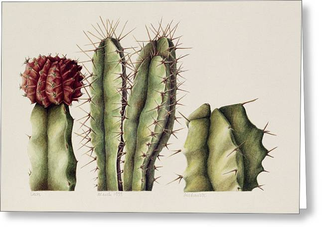 Botanical Paintings Greeting Cards - Cacti Greeting Card by Annabel Barrett