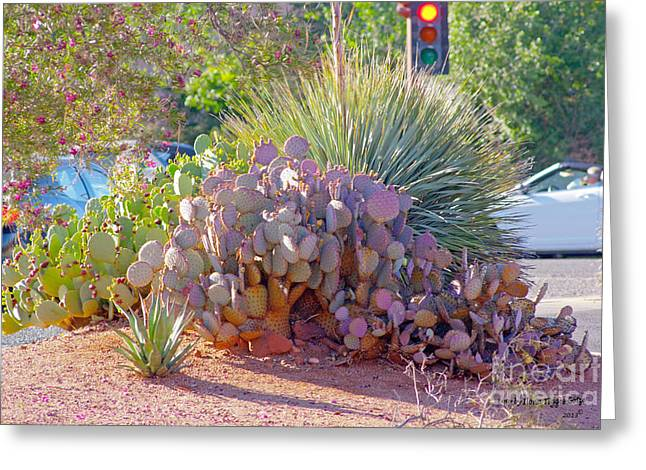 Shower Curtain Greeting Cards - Cacti in Sedona Greeting Card by  ILONA ANITA TIGGES - GOETZE  ART and Photography