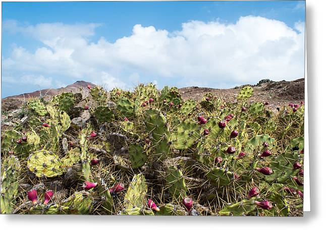 Thorny Desert Plant Greeting Cards - Cacti Rock and Sky Greeting Card by Chay Bewley