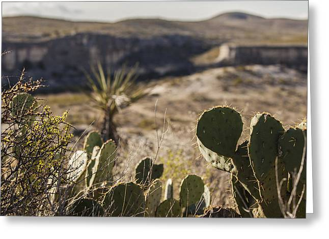 Langtry Greeting Cards - Cactus and Cliffs Greeting Card by Amber Kresge