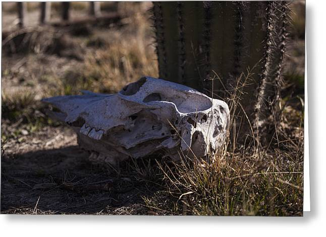 Langtry Greeting Cards - Cactus and Skull Greeting Card by Amber Kresge