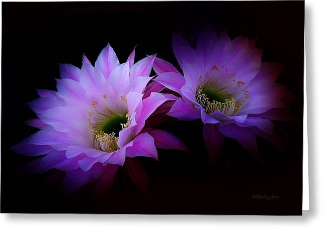 Original Photographs Greeting Cards - Cactus Blossom 7 Greeting Card by Xueling Zou