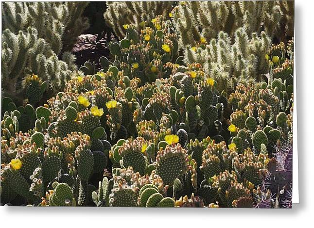 Cactus Carpet Greeting Card by David Rizzo
