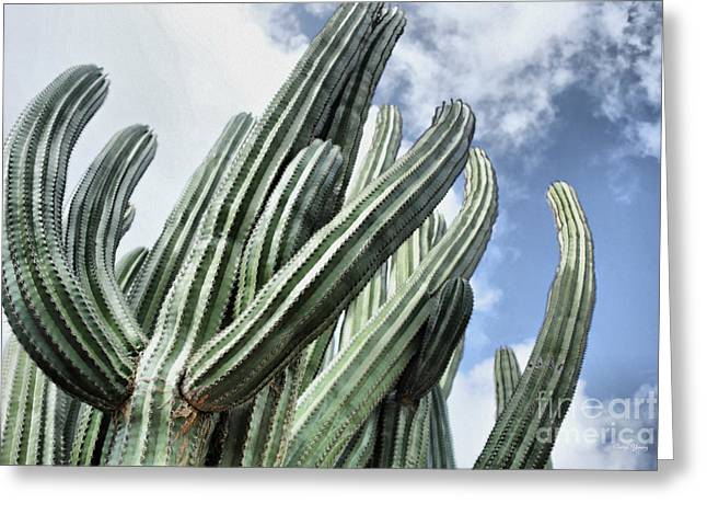 Thin Greeting Cards - Cactus Greeting Card by Cheryl Young