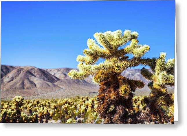 Desert Greeting Cards - Cactus Close Up Greeting Card by Joseph S Giacalone