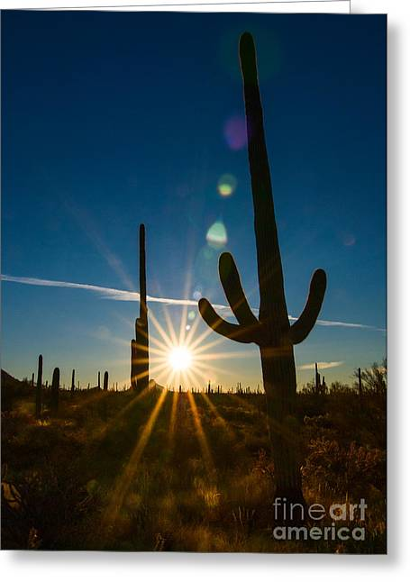 Cactus Flare - Sunrise At Saguaro National Park Greeting Card by Jamie Pham