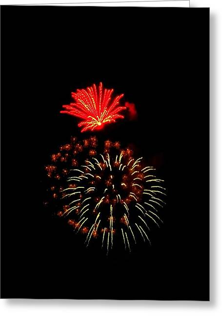 4th July Greeting Cards - Firework Cactus Flower   Greeting Card by Adrienne Wilson