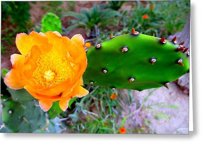 Recently Sold -  - Blooms Greeting Cards - Cactus Flower Greeting Card by Randall Weidner