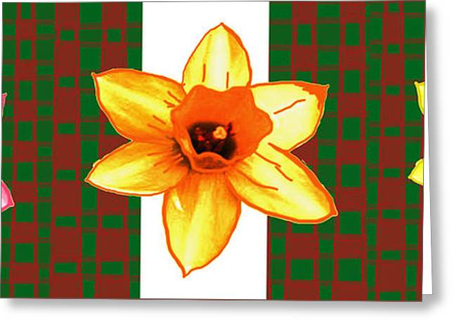 Cactus Flowers By Navinjoshi And An Elegant Decorative Border Base To Focus The Flower Greeting Card by Navin Joshi