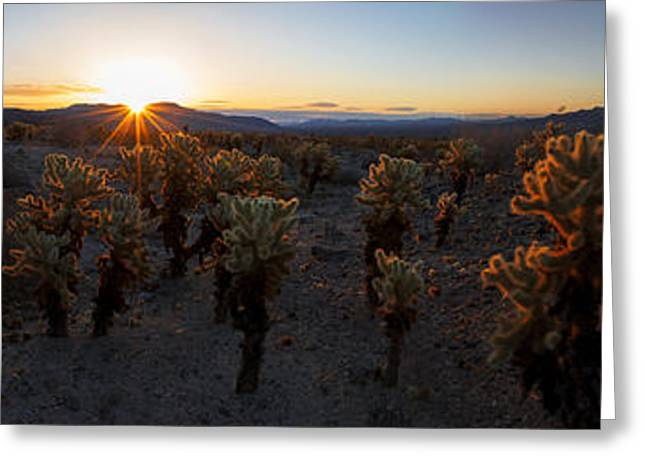 Pinto Greeting Cards - Cactus Forest Greeting Card by Chad Dutson