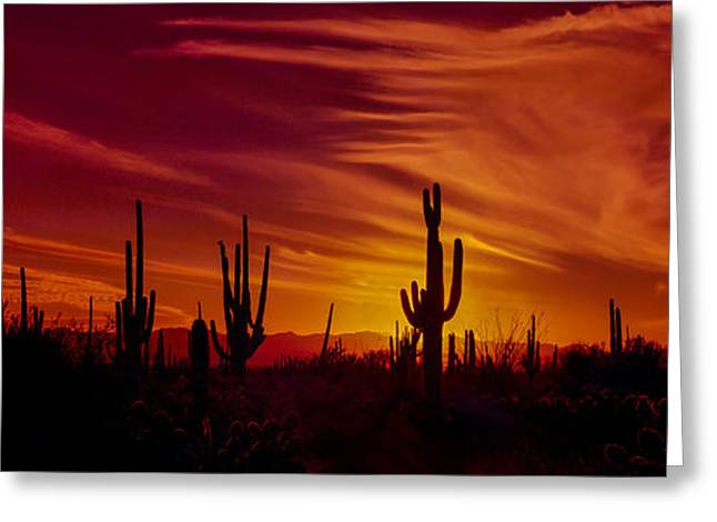 Saguaro Cactus Greeting Cards - Cactus Glow Greeting Card by Mary Jo Allen