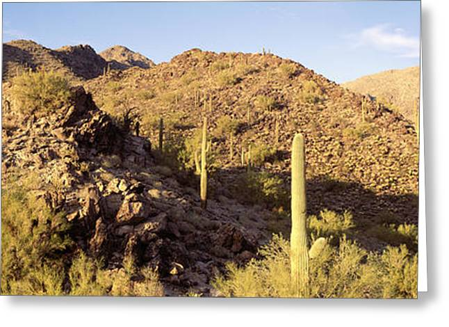 Arid Landscapes Greeting Cards - Cactus Plants On A Landscape, Sierra Greeting Card by Panoramic Images