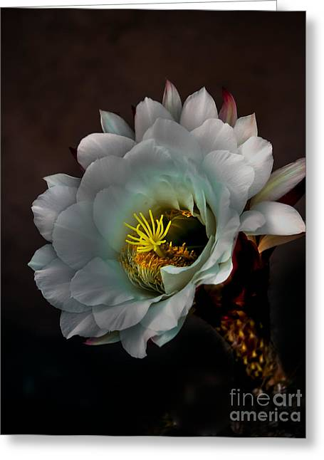 Bloomers Greeting Cards - Cactus Portrait Greeting Card by Robert Bales