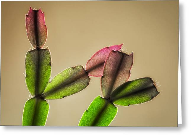 Schlumbergera Bridgesii Greeting Cards - Cactus Rainbow Greeting Card by James Barber