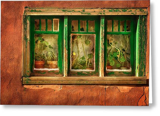 Stucco Greeting Cards - Cactus Window Greeting Card by Keith Berr