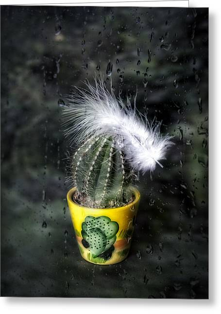Rain Drop Greeting Cards - Cactus With Feather Greeting Card by Joana Kruse
