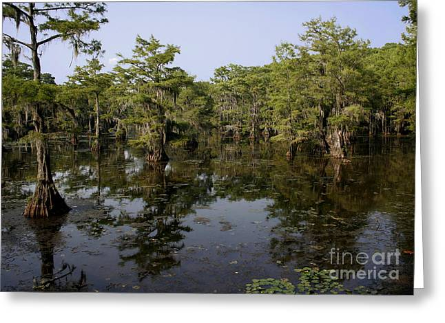 Caddo Lake Greeting Cards - Caddo Lake Bayou 4 Greeting Card by Paul Anderson
