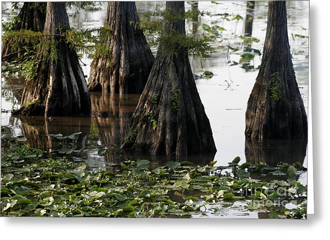 Caddo Lake Greeting Cards - Caddo Lake Bayou 6 Greeting Card by Paul Anderson