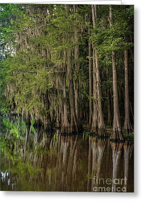 Caddo Lake Cypress Family II Greeting Card by Tamyra Ayles