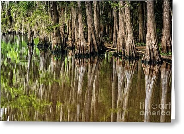 Caddo Lake Cypress Family Greeting Card by Tamyra Ayles