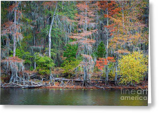 Caddo Lake Greeting Cards - Caddo Lake Fall Foliage Greeting Card by Inge Johnsson