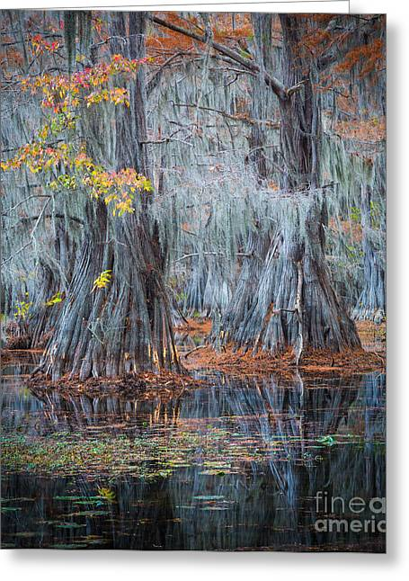 Reflecting Water Greeting Cards - Caddo Lake Fall Greeting Card by Inge Johnsson