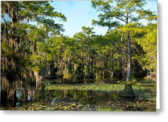 Landscape Photos Greeting Cards - Caddo Lake Lost world Greeting Card by Geoff Mckay
