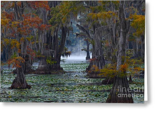 Cypress Trees Greeting Cards - Caddo Lake Morning Greeting Card by Snow White