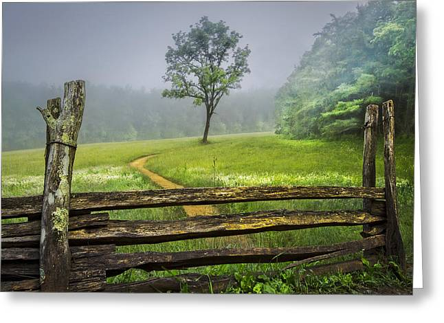 Meadow Scene Greeting Cards - Cades Cove Misty Tree Greeting Card by Debra and Dave Vanderlaan