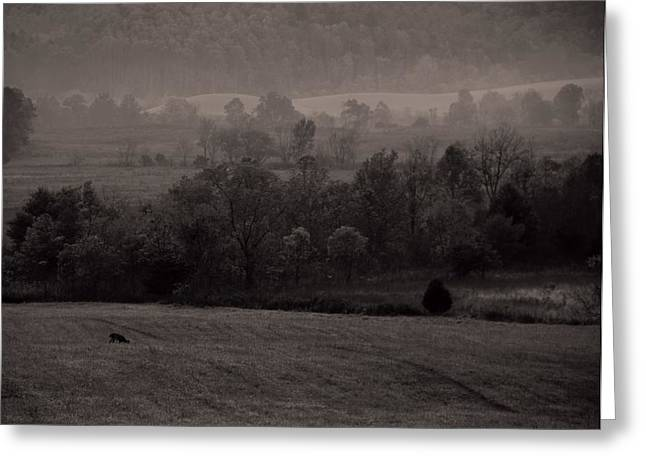 Gatlinburg Tennessee Greeting Cards - Cades Cove Morning Greeting Card by Dan Sproul