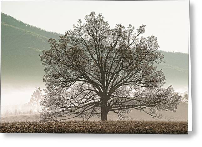 Cades Cove Tree Greeting Card by Phyllis Peterson