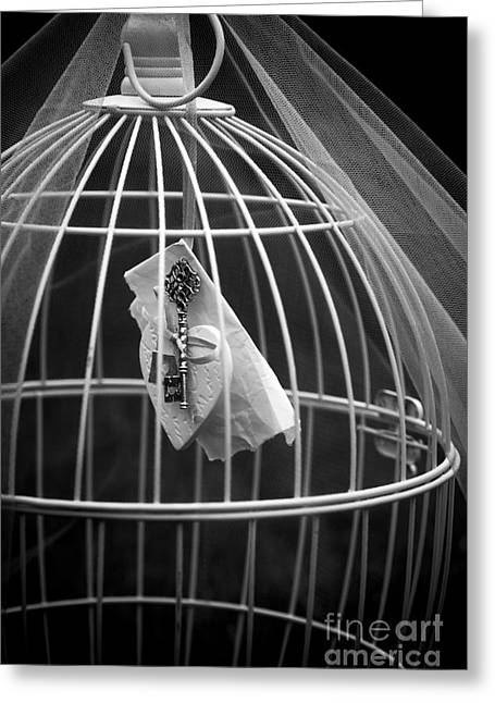 Wire Mixed Media Greeting Cards - Cage Greeting Card by Svetlana Sewell