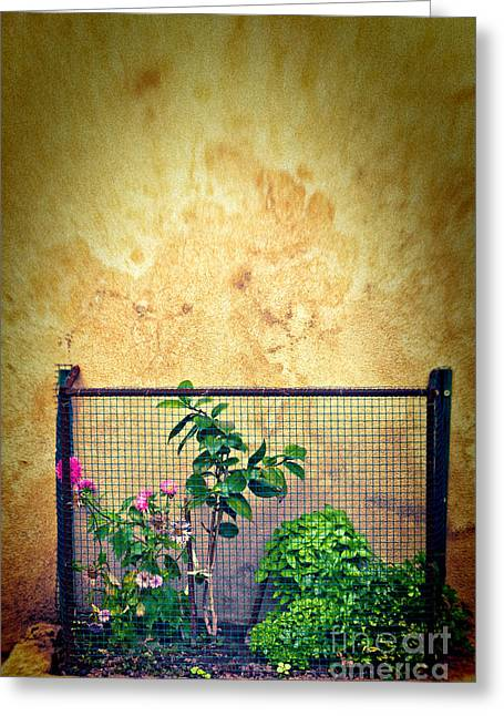 Grate Greeting Cards - Caged Greeting Card by Silvia Ganora