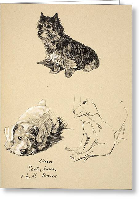 White Dogs Greeting Cards - Cairn, Sealyham And Bull Terrier, 1930 Greeting Card by Cecil Charles Windsor Aldin