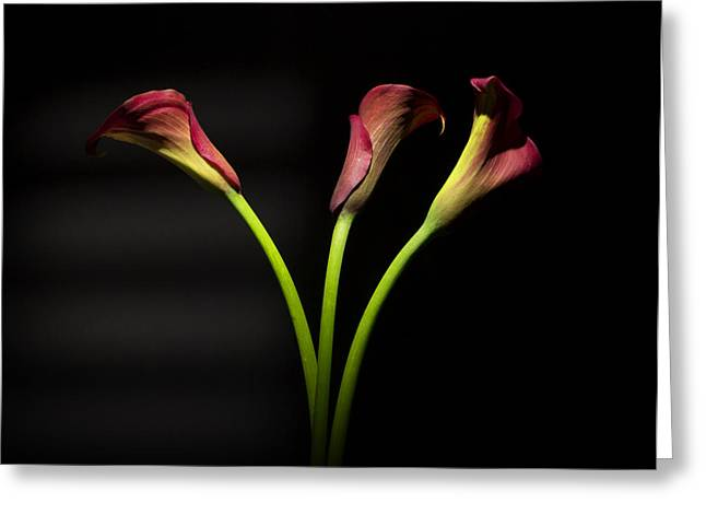 Romanticism Greeting Cards - Cala Lily 4  Greeting Card by Mark Ashkenazi