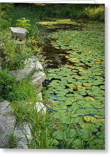 Lincoln Photographs Greeting Cards - Caldwell Lily Pond Chicago IL Number 2 Greeting Card by Steve Gadomski