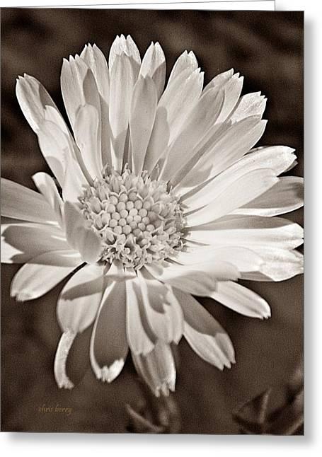 Drama Photographs Greeting Cards - Calendula Greeting Card by Chris Berry