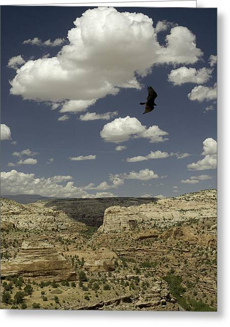 Hawk Creek Greeting Cards - Calf Creek Hawk Greeting Card by Blake Henry