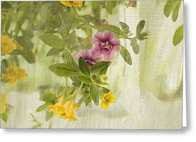 Hanging Baskets Greeting Cards - Calibrachoa in Morning Light Greeting Card by Bonnie Bruno