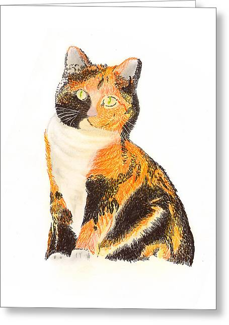 Firsts Drawings Greeting Cards - Calico Arabella Greeting Card by Jack Pumphrey