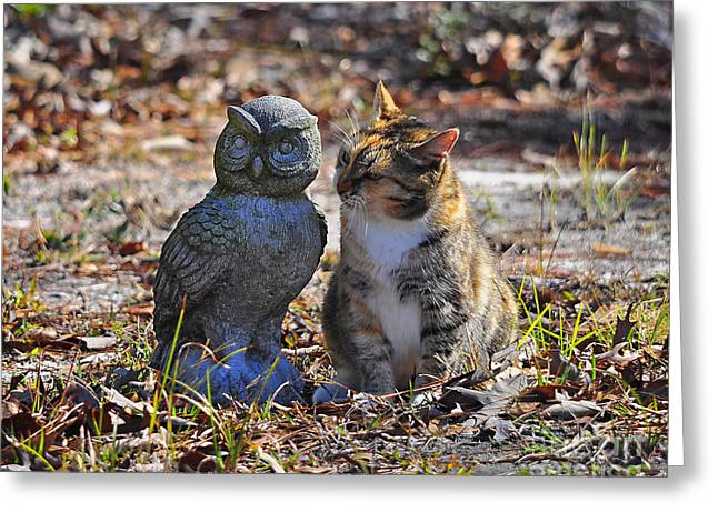 Calico Cat and Obtuse Owl Greeting Card by Al Powell Photography USA