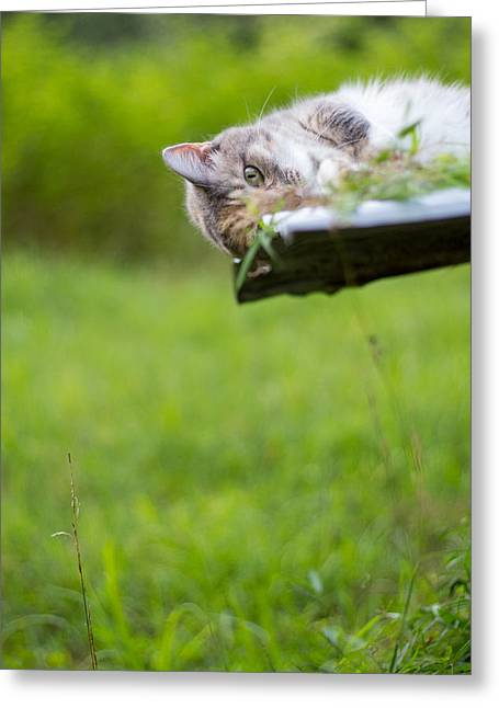 Groomer Art Greeting Cards - Calico Cat Playing Summer Green Greeting Card by Christina Borders
