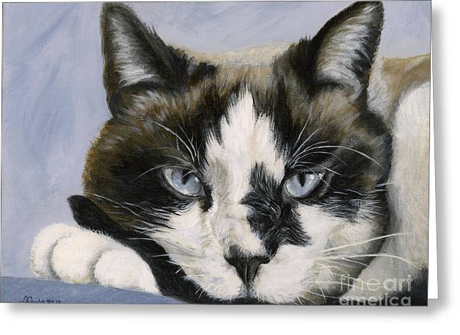 Siamese Cat Print Greeting Cards - Calico Cat with Attitude Greeting Card by Amy Reges
